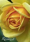 rosen2013_kl
